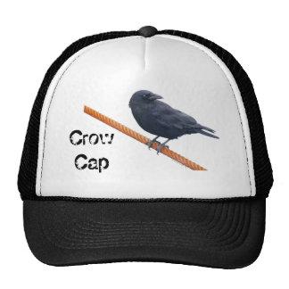 CUERVO EN un gorra del CABLE