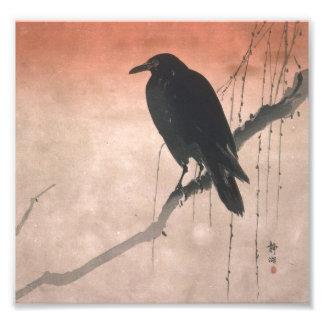 Cuervo en una rama del sauce cojinete