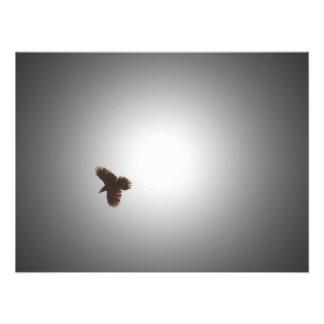 Cuervo en vuelo arte fotográfico