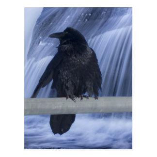 Cuervo encaramado sobre una cascada postal