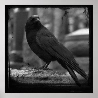 Cuervo monocromático póster