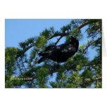 Cuervo negro (1a) - personalizable tarjetón