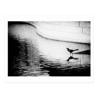 Cuervo negro con la reflexión en el agua - foto Po Postal