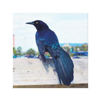 Cuervo negro en un embarcadero impresion en lona