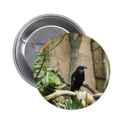 Cuervo negro pin redondo de 2 pulgadas