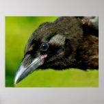 cuervo negro poster
