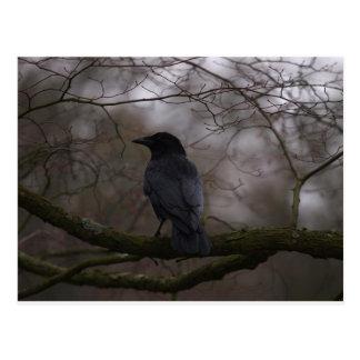 Cuervo negro tarjeta postal