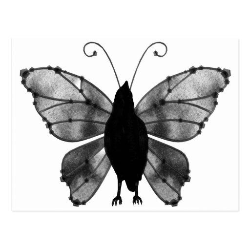 Cuervo negro y blanco de la mariposa postales