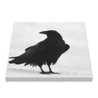 Cuervo orgulloso impresión en lienzo