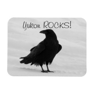 Cuervo orgulloso; Recuerdo del territorio del Yukó Iman Rectangular