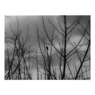 Cuervo oscuro impresiones fotograficas