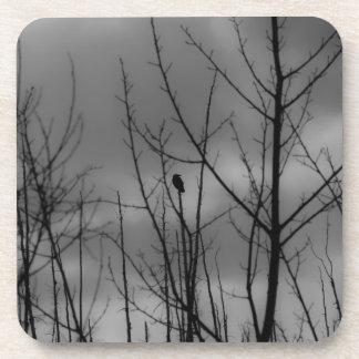 Cuervo oscuro posavaso
