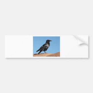 cuervo pegatina para auto