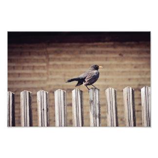 Cuervo Fotografias