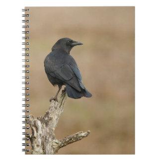 Cuervo que pasa por alto un humedal note book