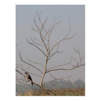 Cuervo que se sienta en un árbol deshojado tarjeta postal