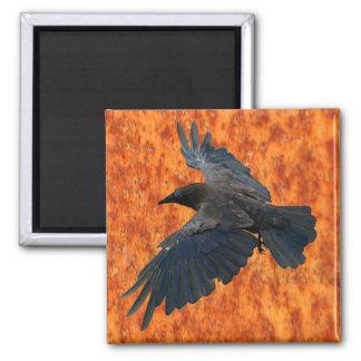 Cuervo que vuela, cuervo y imán rústico del arte d