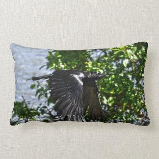 Cuervo que vuela en foto de la fauna de la luz del