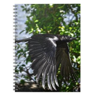 Cuervo que vuela en foto de la fauna de la luz del libreta