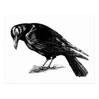 Cuervo retro del negro del vintage postal