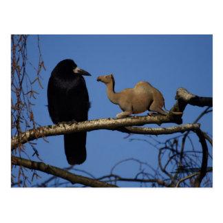 Cuervo sorprendido postales