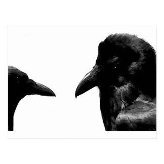 Cuervo y cuervo tarjetas postales