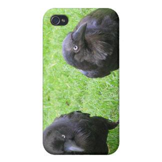 Cuervos disimulados iPhone 4/4S carcasa