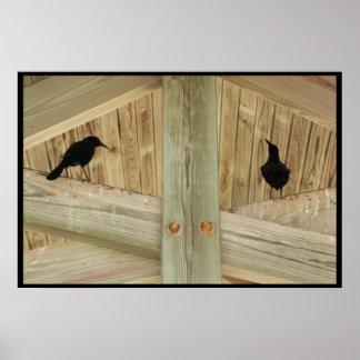 Cuervos en los vigas póster