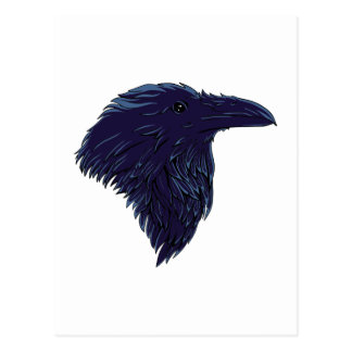Cuervos raven tarjeta postal