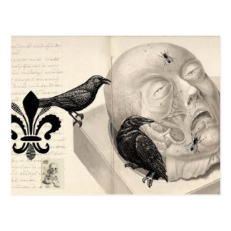 Cuervos y cadáver tarjetas postales