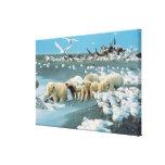 Cuesta del norte, Alaska. Ursus de los osos polare Lona Envuelta Para Galerías