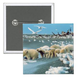 Cuesta del norte, Alaska. Ursus de los osos polare Pin