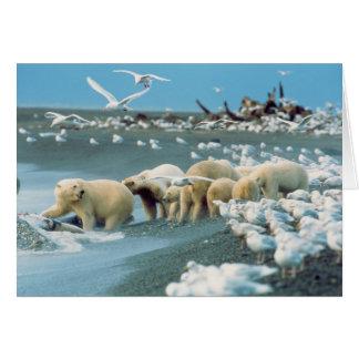 Cuesta del norte, Alaska. Ursus de los osos polare Tarjeta De Felicitación