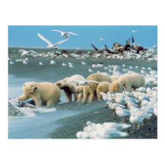Cuesta del norte, Alaska. Ursus de los osos polare Postal