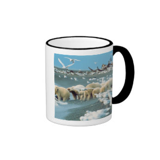 Cuesta del norte, Alaska. Ursus de los osos polare Taza A Dos Colores