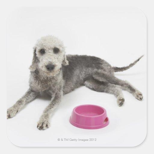 Cuidado de animales de compañía, salud y nutrición calcomania cuadradas personalizada