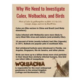 Culex, Wolbachia, and Birds by RoseWrites Flyer