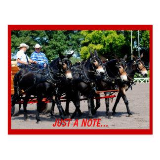 culpeper va draft horse/mule show postcard