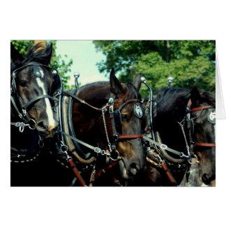 culpeper va draft horse show card