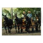 culpeper va draft horse show greeting card