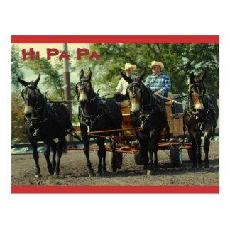 culpeper va draft horse show postcard