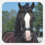 culpeper va draft horse show square sticker