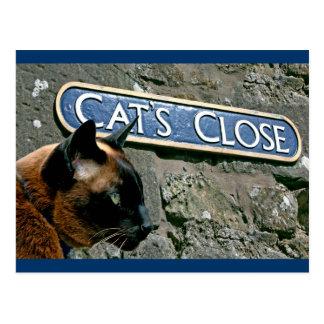 Culross Cat Postcard