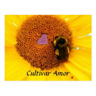 Cultivar Amor Postcard