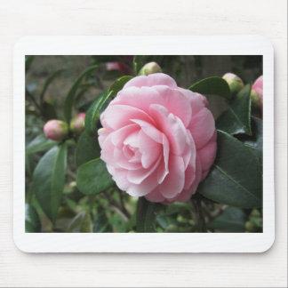 Cultivar japonés del japonica rosado de la camelia alfombrillas de ratón