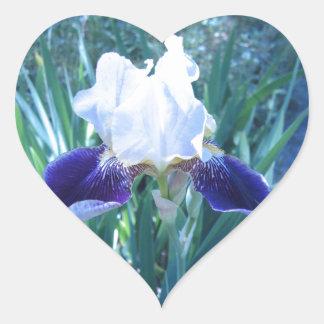Cultivar Maria Todd del iris barbudo Calcomanía De Corazón