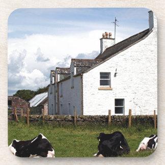 Cultive la casa con las vacas Escocia Reino Unid Posavasos De Bebida