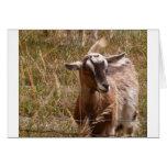 Cultivo de cabras felicitación