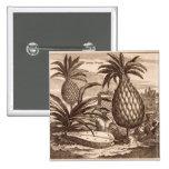 Cultivo de las piñas grandes, ejemplo de un desc pins