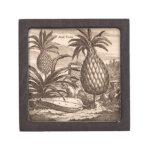 Cultivo de las piñas grandes, ejemplo de un desc caja de joyas de calidad